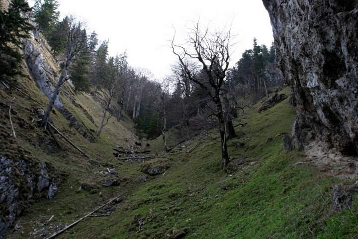 steighilfen für bäume